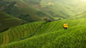 Photographer in the rice paddies of Vietnam