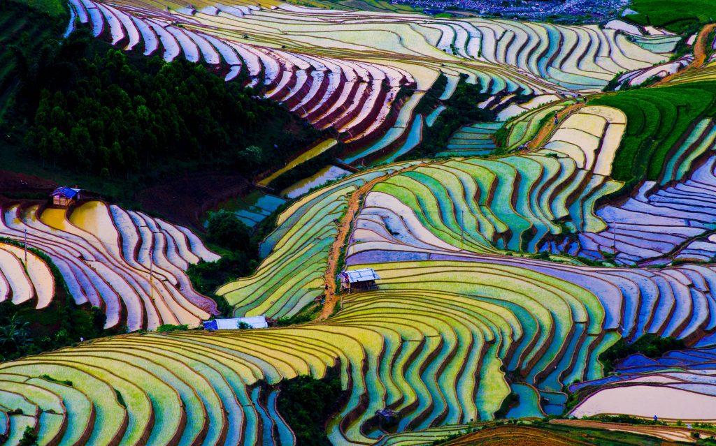 Colorful terraced rice fields, Sapa