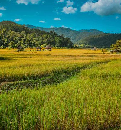 Chiang Rai to Pai