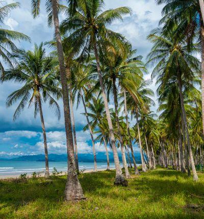 Puerto Princesa hasta San Vicente, Isla de Palawan